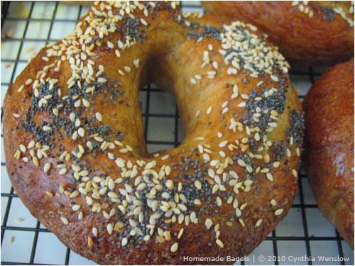 Homemade Bagels by Cynthia Wenslow