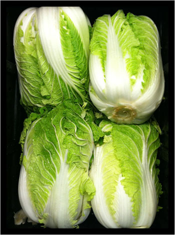 Napa Cabbage